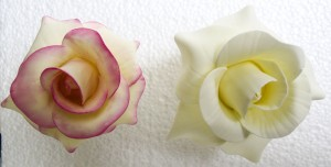 Figure G- Rose dusted with pink petal dust (left) in comparison to plain ivory rose(right)